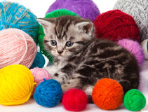 Kitten with balls of threads. Royalty Free Stock Photo