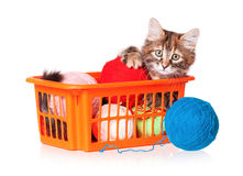 Kitten with balls of threads Royalty Free Stock Photo