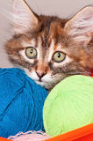 Kitten with balls of threads Stock Photos