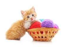 Kitten with balls of yarn in the basket. On a white background royalty free stock photography