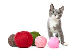 Kitten with balls of yarn Royalty Free Stock Photos