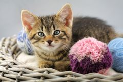 Kitten with a balls of yarn royalty free stock photos