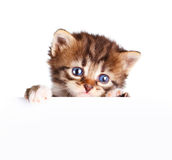 Kitten banner. Isolated on white background Stock Photography