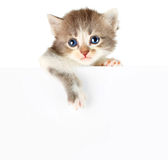 Kitten banner Stock Photography