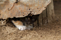 Kitten hiding under rusty tin Royalty Free Stock Photo