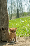 Kitten by barn door Royalty Free Stock Photo