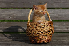 Kitten in a basket. The kitten is in the basket on the garden bench Stock Photo