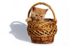 Kitten in a basket. The kitten is in the basket on the garden bench Royalty Free Stock Photos