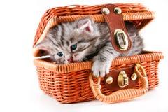 Kitten in basket Royalty Free Stock Photo