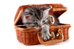 Kitten in basket royalty free stock photography