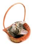 Kitten in basket Stock Photos