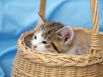 Kitten in basket stock photo