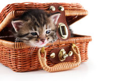 Kitten in basket. Cute kitten in basket isolated on white background Stock Photography