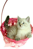 Kitten in a basket. The kitten sleeps in a pink basket on a white background Stock Photography