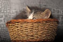 Kitten  in a basket. Kitten hiding in a basket Stock Photos
