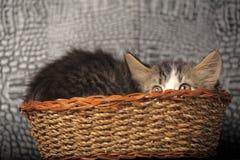 Kitten  in a basket. Kitten hiding in a basket Stock Images