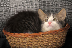 Kitten  in a basket Royalty Free Stock Photos
