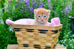 Kitten in basket Stock Photos