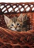 The kitten in the basket Stock Photo