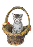 Kitten in a Basket Stock Photos