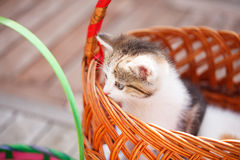 Kitten in a basket Royalty Free Stock Photography