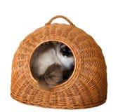 kitten in  a basket Stock Image