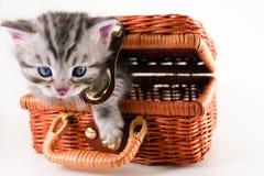Kitten in basket Stock Photography