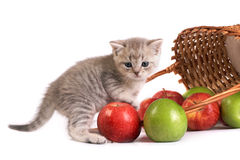 Kitten and a basket with apples Stock Photos