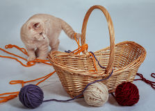 Kitten in the basket Stock Images