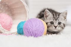 Kitten in a basket with balls of yarn. Gray striped kitten sitting next to a basket ball of yarn in the interior Royalty Free Stock Photography