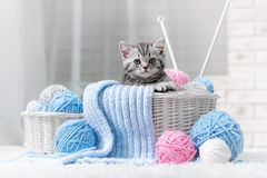 Kitten in a basket with balls of yarn. Gray striped kitten sitting next to a basket ball of yarn in the interior Royalty Free Stock Images