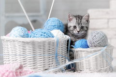 Kitten in a basket with balls of yarn stock photos