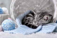 Kitten in a basket with balls of yarn. Gray tabby kitten sitting in a basket with balls of yarn Royalty Free Stock Photo