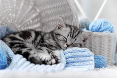 Kitten in a basket with balls of yarn. Gray tabby kitten sitting in a basket with balls of yarn Stock Image