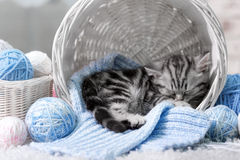 Kitten in a basket with balls of yarn. Gray tabby kitten sleeps in a basket with balls of yarn Stock Photo