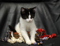 Kitten in a basket with beads Royalty Free Stock Photography