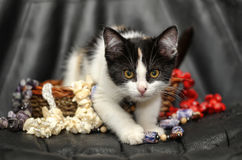 Kitten in a basket with beads Royalty Free Stock Photos