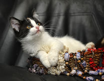 Kitten in a basket with beads Stock Photo