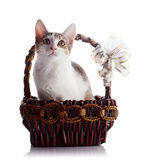 Kitten in a basket with a bow. Royalty Free Stock Photo