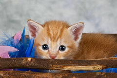 Kitten in basket Stock Photography