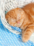 Kitten in a basket Stock Photography