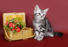 Kitten with a basket of flowers. Stock Photo