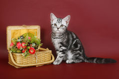 Kitten with a basket of flowers. Stock Images