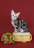 Kitten with a basket of flowers. royalty free stock photography