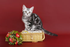 Kitten with a basket of flowers. Royalty Free Stock Photos