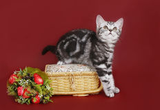 Kitten with a basket of flowers. Stock Photos