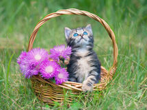 Kitten in a basket with flowers Royalty Free Stock Photo