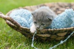Kitten in a basket Stock Photos