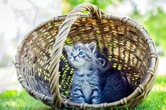 Kitten  in a basket. A Little kitten in a basket on the grass Stock Photography