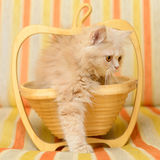 Kitten in basket Stock Images